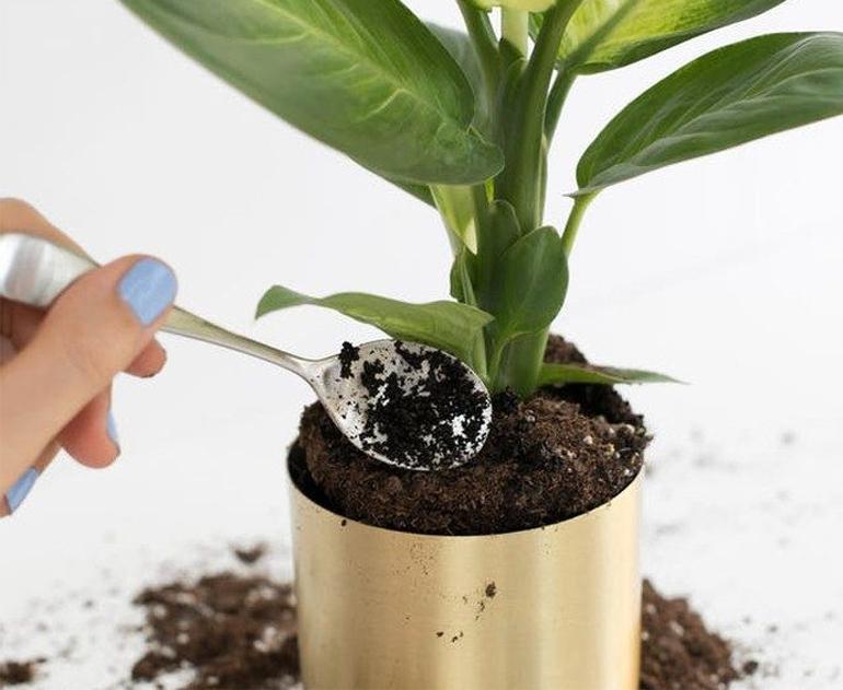 Гуща для растений