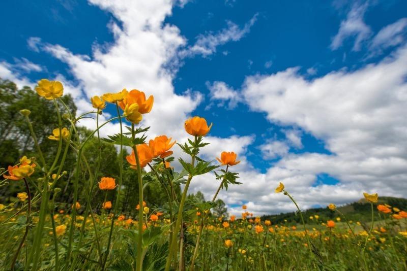 По каким приметам в июне можно узнать погоду на все лето