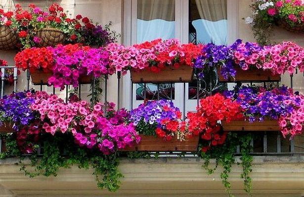 Организация цветника на балконе — Рамблер/новости